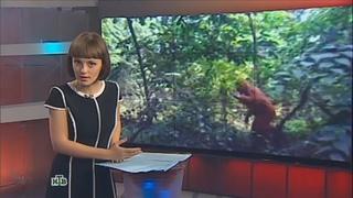 Жители Адыгеи с камерами охотятся на йети и изучают странные следы   НТВ   2014