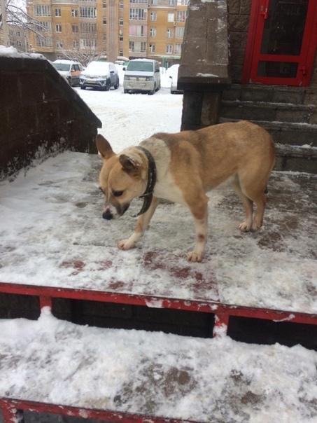 Найдена собака НЮСЯ !!! Вот эта девочка просидела двое суток у магазин
