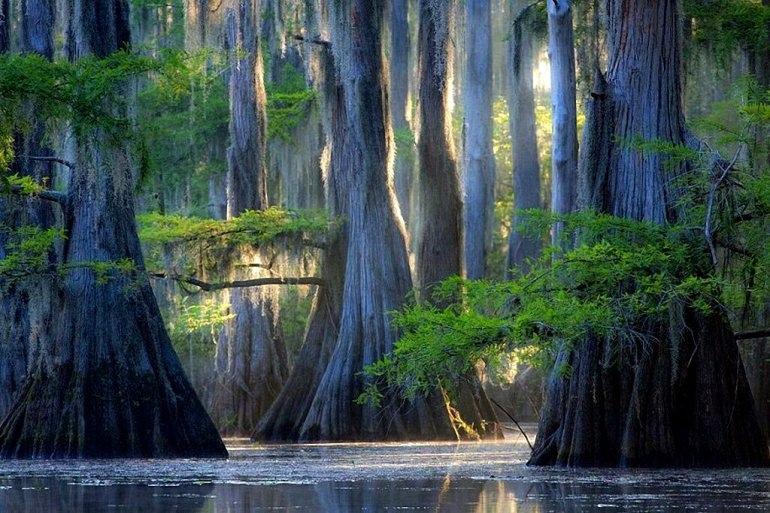 Интересные места нашей планеты Кипарисовые деревья озера Каддо (США)