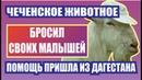 Последние новости Чечни сегодня Дагестанцы помогли чеченской семье Рамзан Кадыров