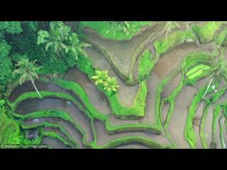 Tegalalang, bali - рисовые террасы (4k ultra hd).