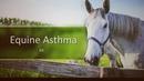 Астма у лошадей Equine Asthma
