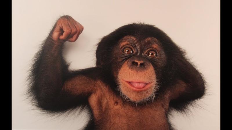 Смешные обезьяны   Лучшая подборка видео приколов с обезьянками (Часть 4)