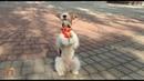 Фокстерьер Тэффи 50 команд Clever fox terrier Taffy 50 amazing dog tricks
