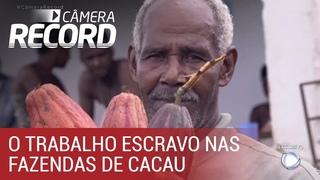 Cmera Record denuncia trabalho escravo em fazendas de cacau na Bahia