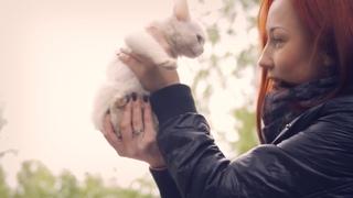 Бездомные животные: дай им шанс на жизнь | Социальная реклама, мотивация | Кошки, собаки