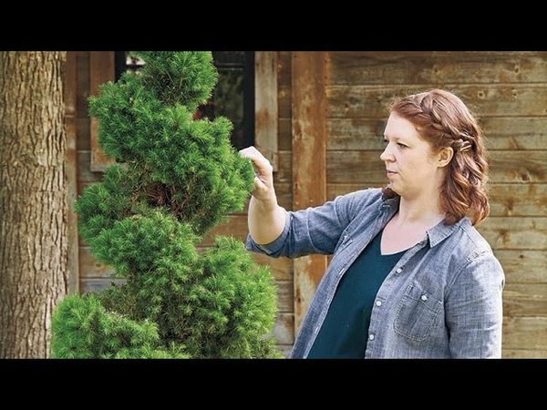 How To Create a Spiral Topiary