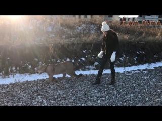 Marie Cougar — BIQLE Video