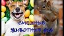 Смешные КОТЫ, СОБАКИ, ЕНОТЫ, ПОПУГАИ 16 / Ржачные животные 2020.