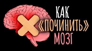 Как вырастить новые нейроны и как мозг сам себя лечит / #ТЕДсаммари