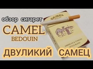 Эксклюзивное видео! Двуликий самец - обзор сигарет Camel bedouin (с канала Фляжка и Портсигар)