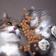 id_22339 Как корм видит котика 😊  #gif@bon