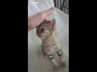 Милый котик смотрит улыбается