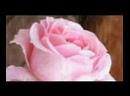 Красивое поздравление с Днем 8 МАРТА - Международным Женским Днем. Красивая видео открытка_001.mp4