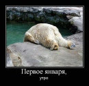 Фотоальбом Дмитрия Поповы