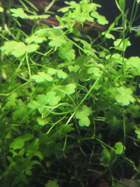 1 Юлия Черкас - Обзор светильника AQUAEL LEDDY SMART 2 PLANT, изображение №7