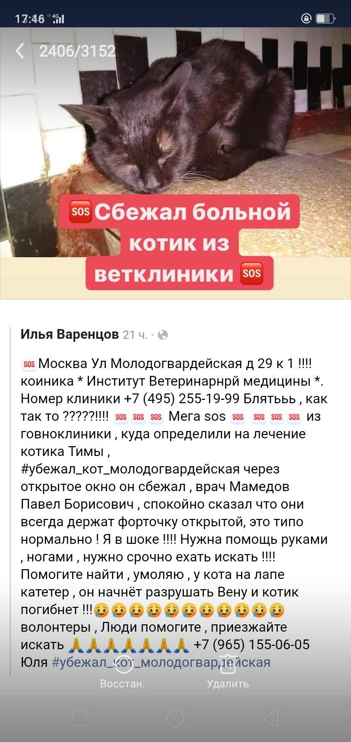 На Ращупкина,около 7 дома бегает маленькая,пушастыя ,чёрная кошка.