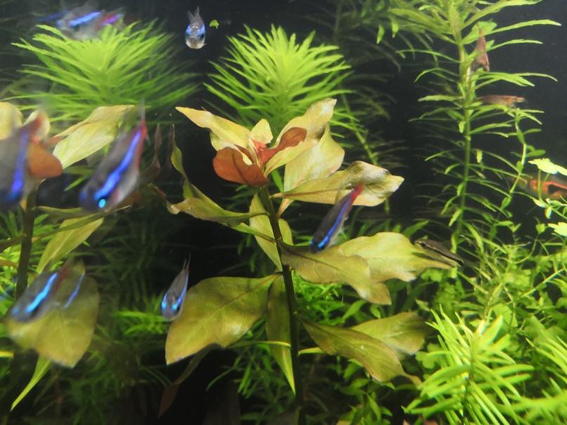 1 Юлия Черкас - Обзор светильника AQUAEL LEDDY SMART 2 PLANT, изображение №10