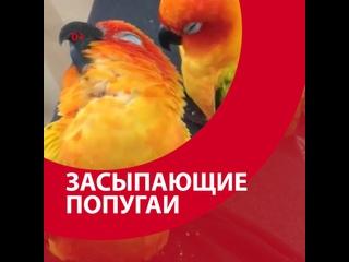 Попугаев клонит в сон — Москва FM