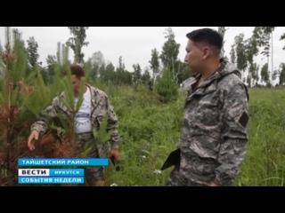 Активисты ОНФ уверены — в лесничестве в Тайшетском районе садили деревья фиктивно