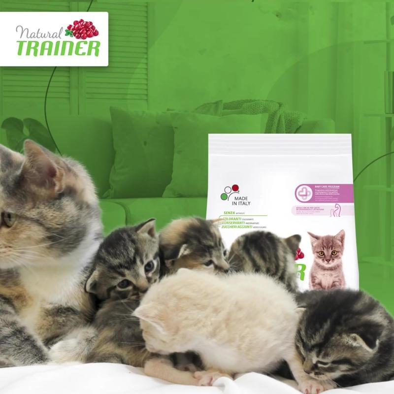 Какой корм выбрать для беременных и кормящих кошек?