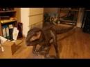 Кормим домашнего динозавра мороженкой