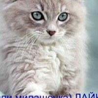 КристинаКотова
