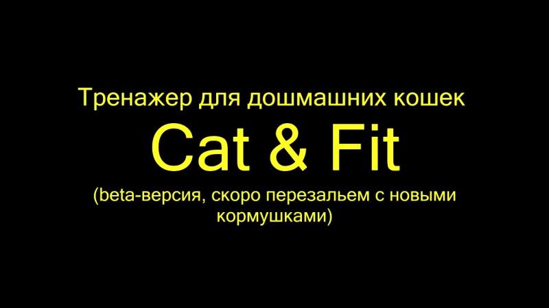 CatNFit, IoT-тренажер для домашних кошек, - защитит от ожирения