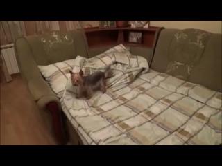Как вытирается мокрая собака? )