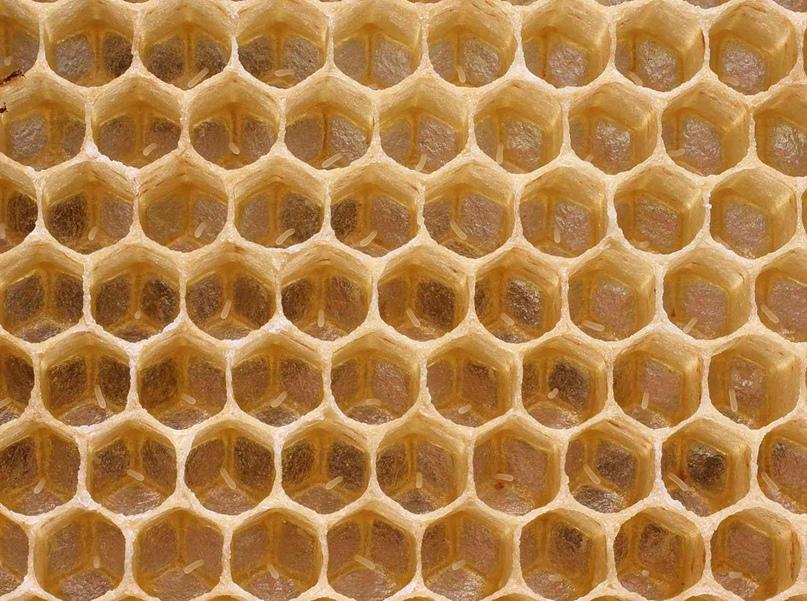 Математика пчелиной ячейки, изображение №1