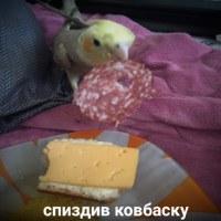 Личная фотография Алии Акиловой