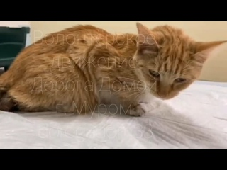 Video by Olga Nikitina