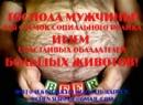 Грамматиков Никита   Санкт-Петербург   19