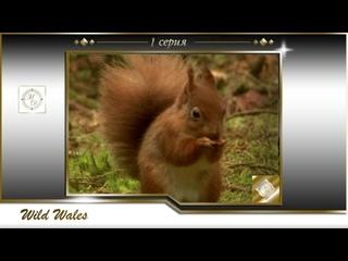 Дикий Уэльс 1 серия Прекрасный юг / Wild Wales 01 The beautiful south