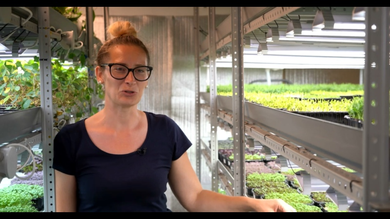 Городские стартапы Ферма микрозелени