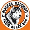 Аляскинские маламуты из Конев-Бора