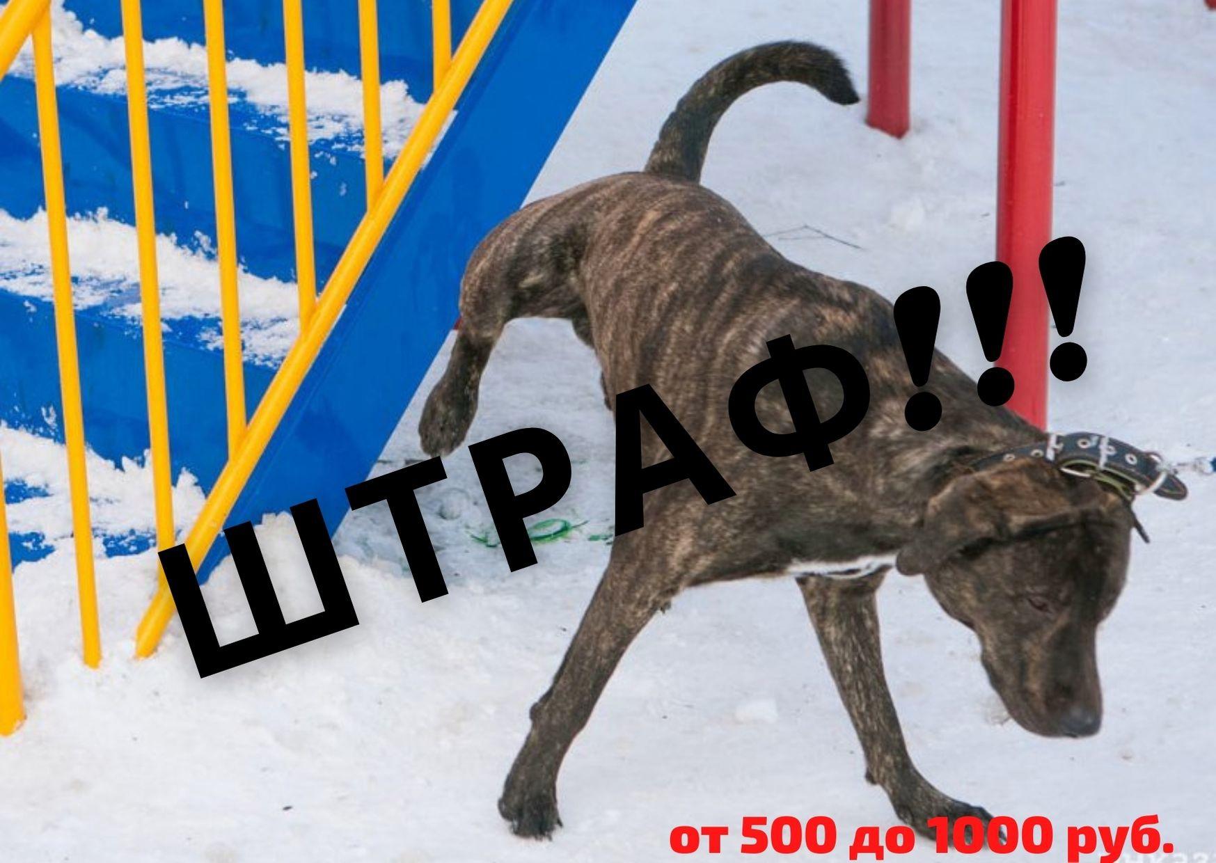 В Кимрах администрация на видео будет снимать экскременты домашних животных