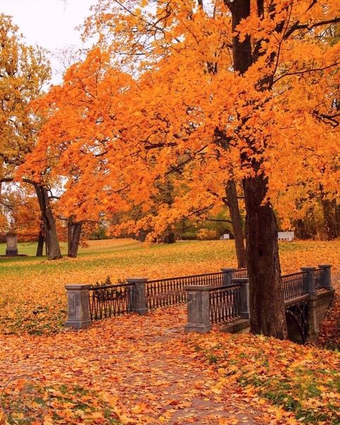 В Екатерининском парке 🍁🍁🍁📷marina_zippy...