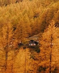 Урал настиг холодный сентябрь, а пока мы ждем (верим и надеемся) бабье лето - полюбуемся на золотую осень в Швейцарии