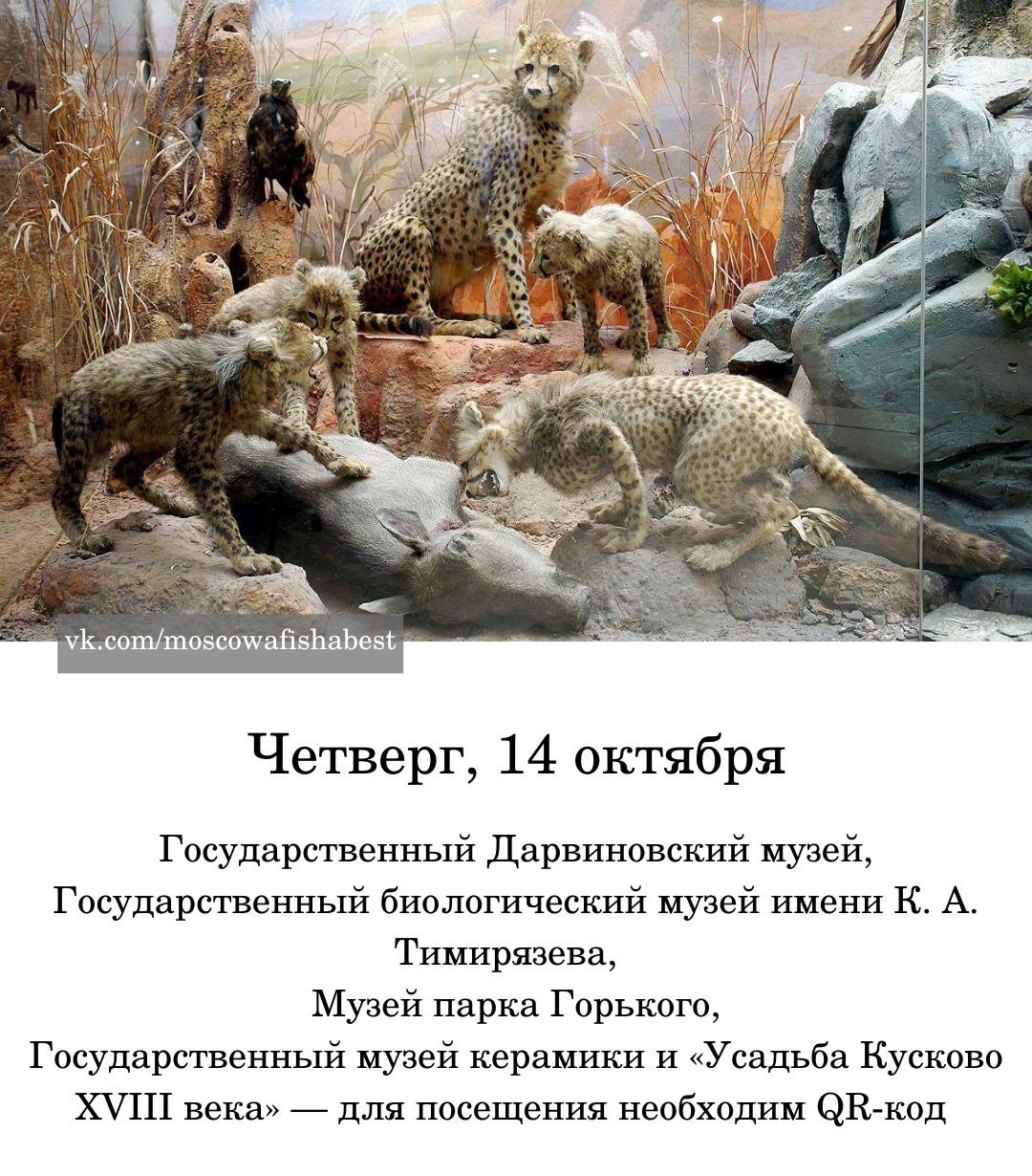 В Москве началась музейная неделя.