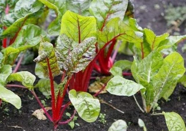 заговоры и советы для вашего урожая,  звговоры для сада и огорода, заговоры для высокого урожая,