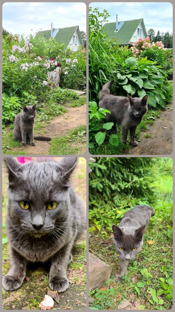 Добрый вечер! Ищем старых или новых хозяев кота. Уже неделю, как пришел в 4СНТ....