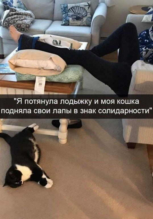 Котья солидарность