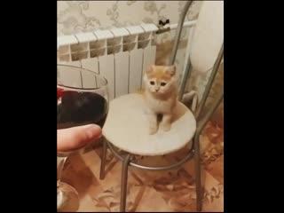 Мне б такого кота, я бы и не женился!!