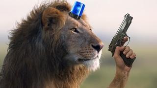 Львы мусорнулись !it!мма!mma!стеб!periscope#тлт#спб#екб#нск!кдр!РнД!нн!пск!хбр!блондинка!