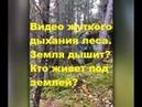 Видео жуткого дыхания леса. Земля дышит? Кто живет под землей?