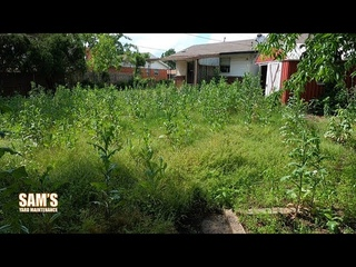 OVERGROWN Backyard Clean Up Ep. 2 | TALL GRASS Mow | Community Service | Oddly Satisfying