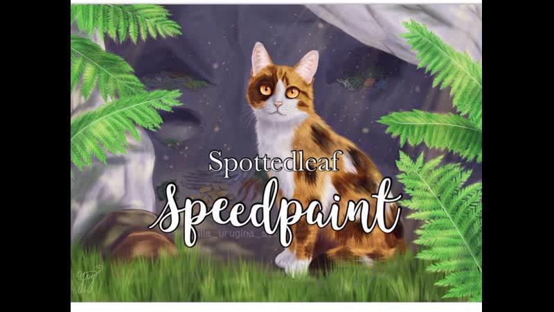 Пестролистая Spottedleaf
