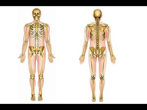 Comment mémoriser le squelette humain