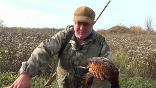 Охота на фазана с гончими \ Дневники охотника.
